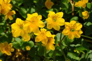 20 Pretty unusual and funny flower names