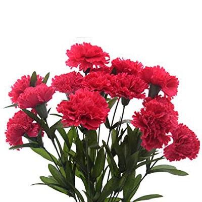 Carnation Flowers Kolkata