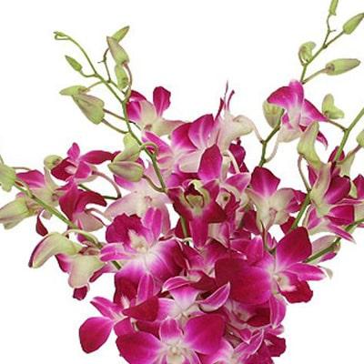 Orchids Flowers Kolkata