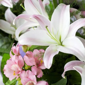 Sympathy Flowers Kolkata
