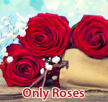 Valentine Roses Kolkata