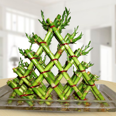 5 layer Lucky bamboo braided