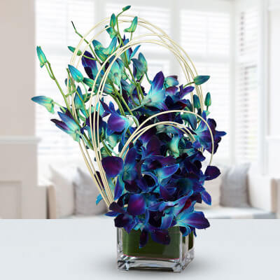 Beautiful Blue Orchids