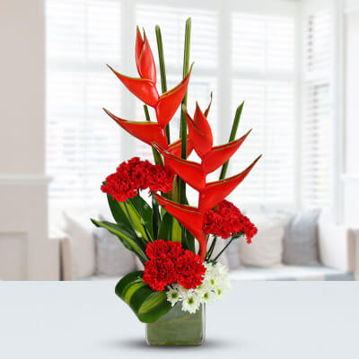 Heliconia Dark Red